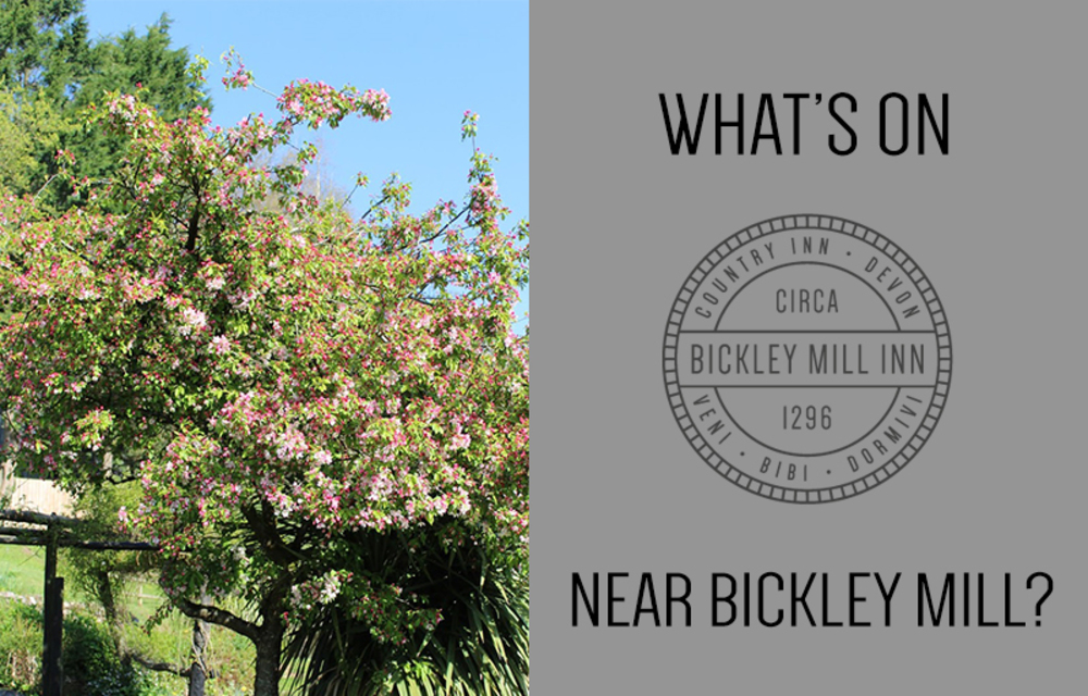 What's on near Bickley Mill?